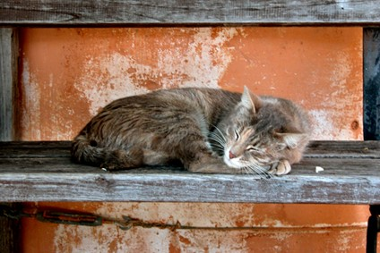 chat sait autrement, par Claire Rochas